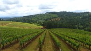 Chianti Winetasting tour Florence