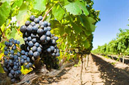 tuscan-wine-tasting